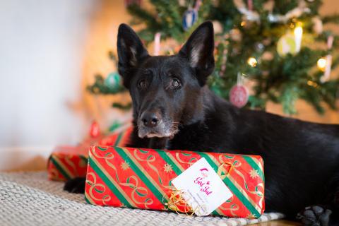 Ofarliga julklappar till hunden