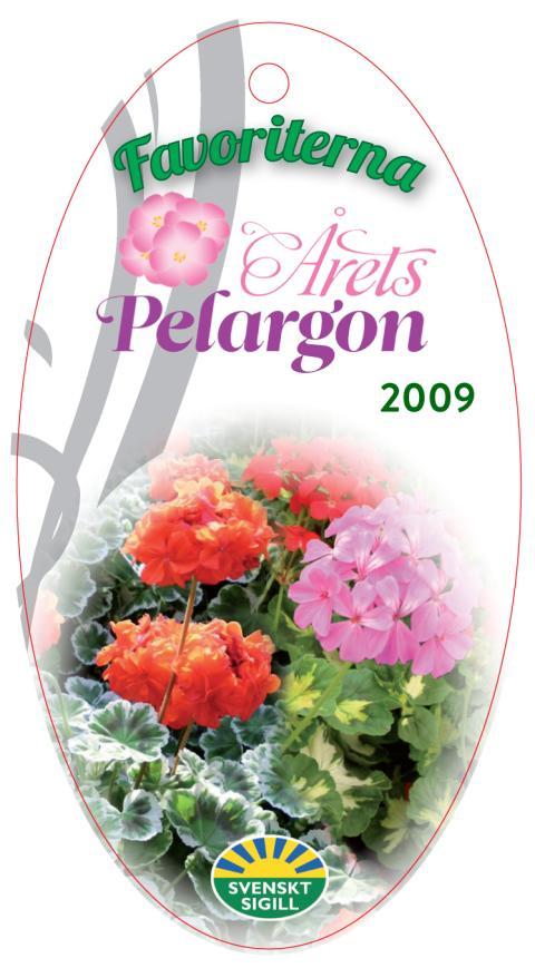 Årets Pelargon - här är favoriterna