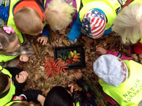 Bland löv, kottar och kryp på Hovdala vandringsfestival 21 september