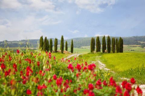 Vandring & vin i Toscana