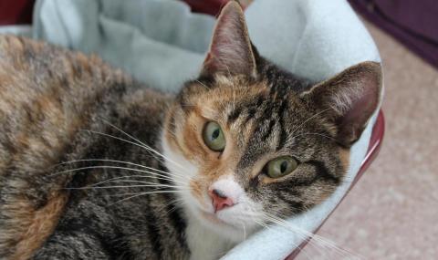 40 000 kr till hemlösa katter i Alla hjärtans dag-gåva