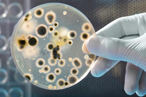 Avföringstransplantation prövas på brännskadade i världsunik studie på Akademiska