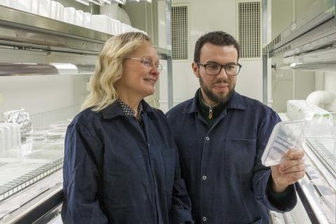 Forskare avslöjar liknande organutveckling i växter och djur