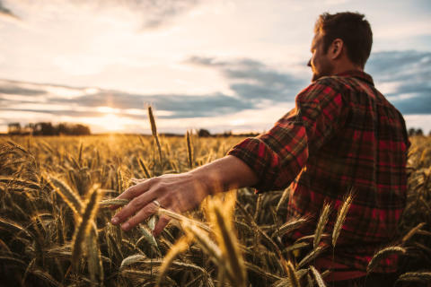 Wasa påbörjar samarbete med Indigo Ag och Svensk Kolinlagring för att lagra kol i jorden genom regenerativt jordbruk.