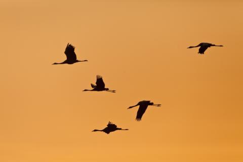 Herbstlicher Vogelzug in Brandenburg