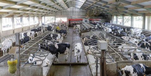 """Melkveehouderij zet klimaatparcours uit. """"Europese klimaatdoelstellingen zijn haalbaar als we inzetten op onderzoek en ontwikkeling in de sector."""""""
