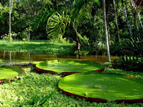Explore the world's most spectacular rainforest on Fred. Olsen's  'Amazon River & the Beaches of the Caribbean' cruise