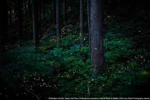 SWPA 2020_Masahiro Hiroike, Japan, 2nd Place, Professional competition, Natural World & Wildlife
