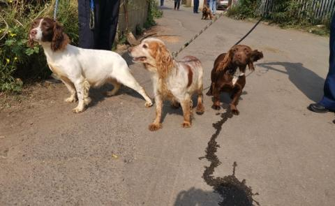 Advice to pet owners after dogs recovered in Orpington