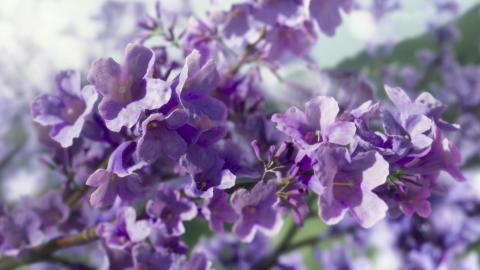 Sony_BRAVIA OLED_Kampagne_09