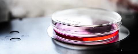 Idogen med i stor Vinnova-satsning för att göra Sverige ledande inom biologiska läkemedel