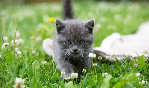 Sveland höjer katternas ersättningsnivå