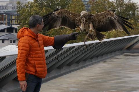Freedom Eagle London