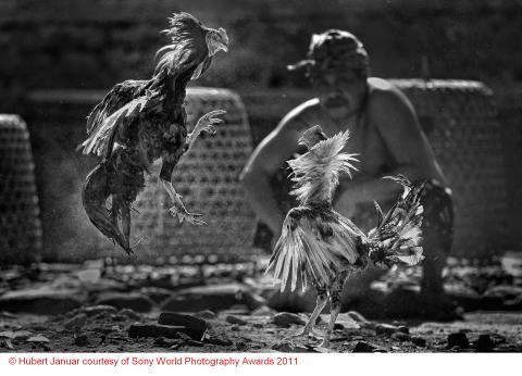 Copyright Hubert Januar courtesy of Sony World Photography Awards 2011