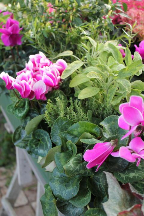 Sensommarplantering i rosa toner