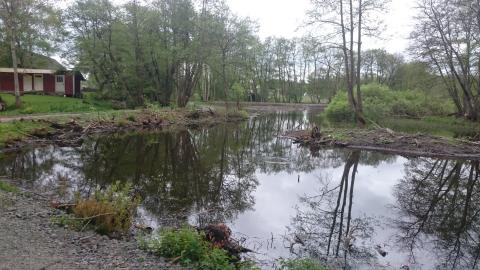 Ljungamölla våtmark, Vinslöv
