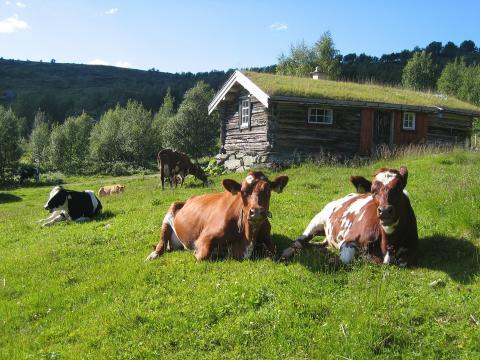Visma Consulting og Landbruksdirektoratet har inngått en avtale om utvikling av nytt IT-system for melkekvoteordningen i Landbruksdirektoratet.