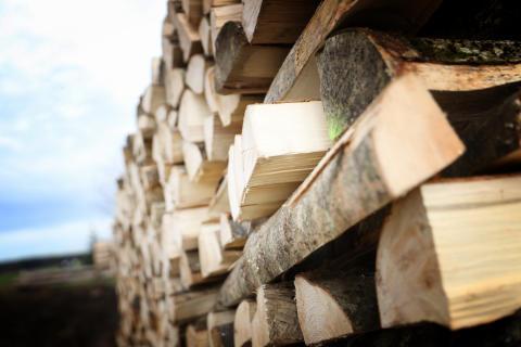 Erneuerbare Energien - Holz