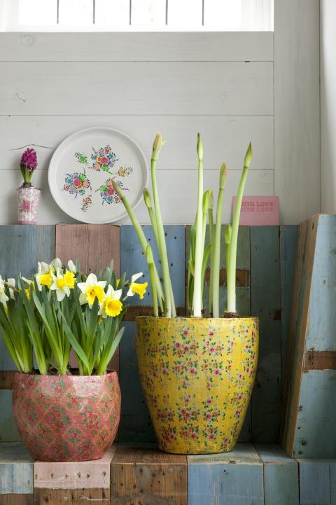 Blomsterlök i udda, vackra krukor