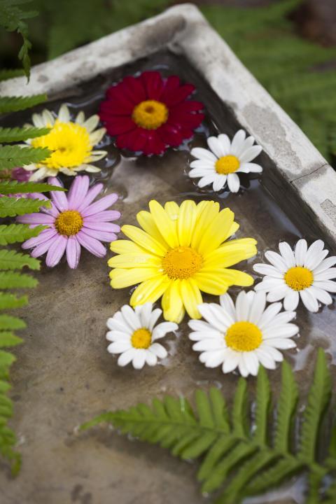 Vattenbad med blommor.
