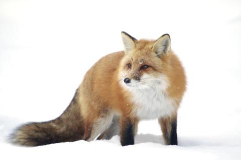 ChrisMacDonald_Canada_Open_WildlifeOpencompetition_2018