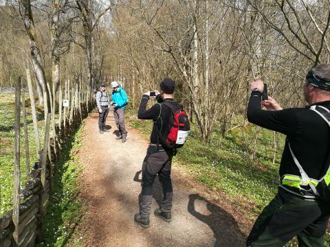Rekorddeltagande på Internationell vandringskongress i Borås under Linnémarschen