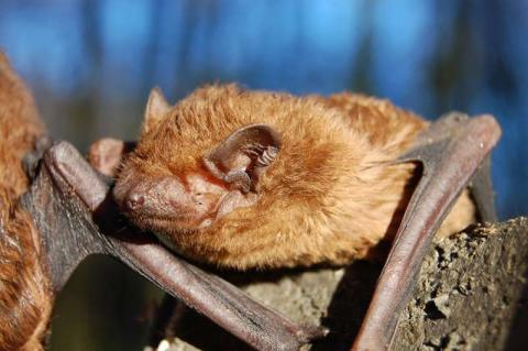 Zoo und Naturschutzbund testen mit kleinen Gästen die neue Fledermaus-Spielstation