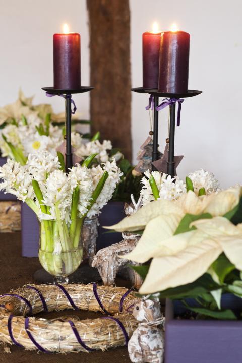 Julstjärna och hyacint