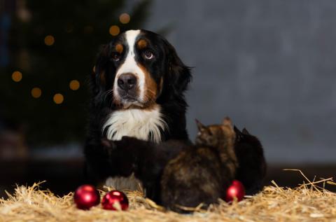 Jul - hund och katt