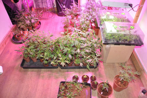 Four men arrested after cannabis farm discovery in Kensington