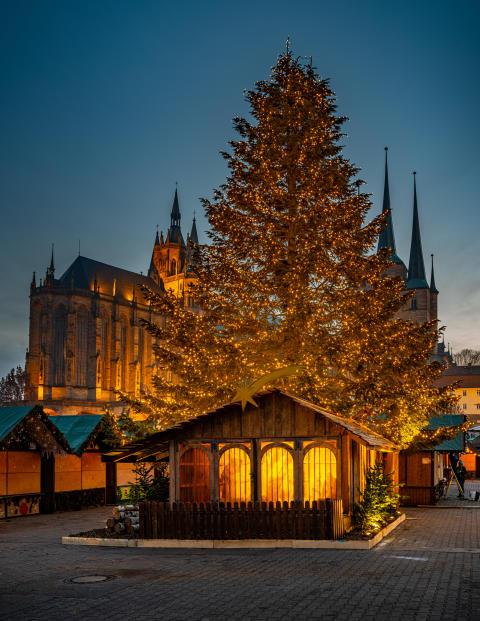 10. Weihnachtsbaum in Erfurt