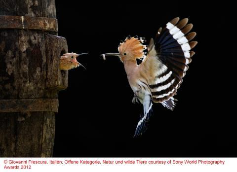 Copyrigh Giovanni Frescura, Italy, Natur und wilde Tiere courtesy of SWPA 2012