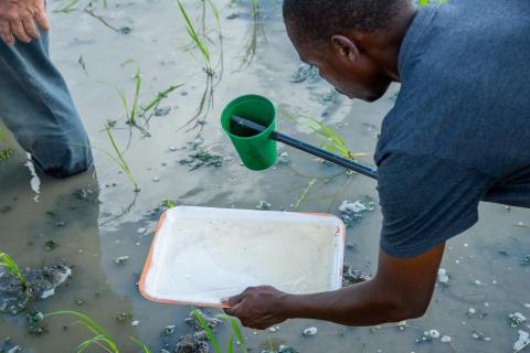 Sampling mosquitoes