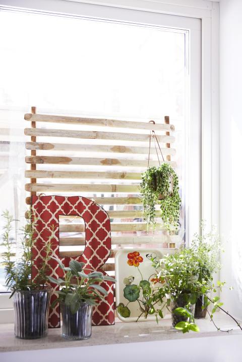 Skön miljö på fönsterbrädan med svenskodlade prydnadsväxter.