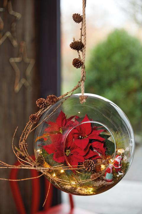 Miniatyrlandskap med julstjärnor.