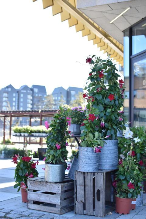 Växter utanför Billdals Blommor