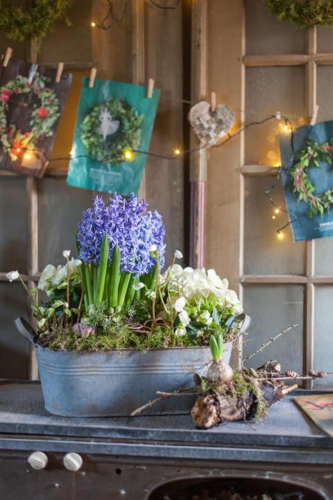 Julinspiration med svenska hyacinter