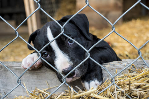 Think before you buy – help stop illegal puppy trade this Christmas