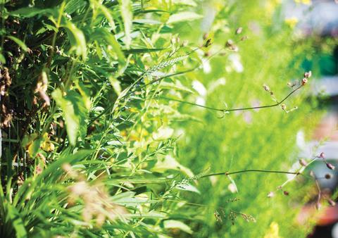Miljonstöd för stadsgrönska med start i år