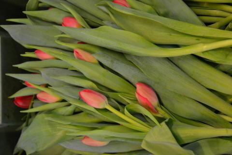 Målsta Blommor