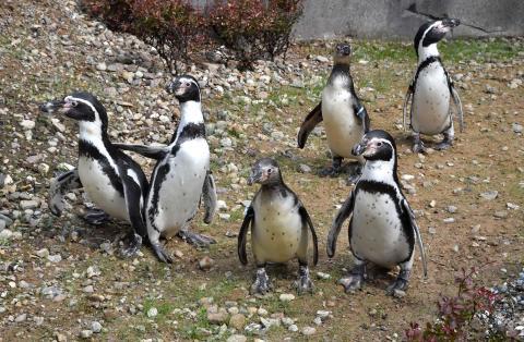 Pinguine im Polarium