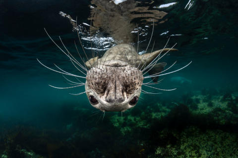 2730_1401089_0_ © Greg Lecoeur, National Awards 1st Place, France, Shortlist, Open competition, Natural World _ Wildlife, 2019 Sony World Photography Awards