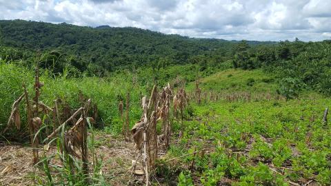 Climate change could shrink vital tropical rainfall belt