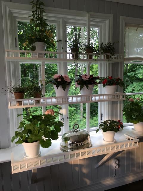Svenskodlade växter i fönstret