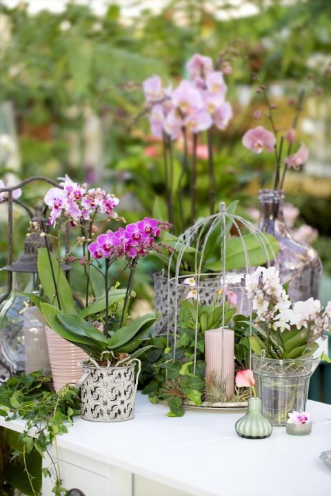 Orkidéer med vänner
