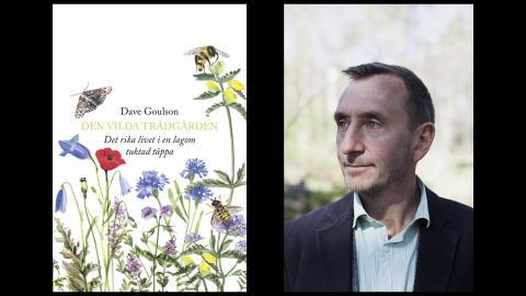 Kär återkomst: Dave Goulson om det rika livet i den vilda trädgården