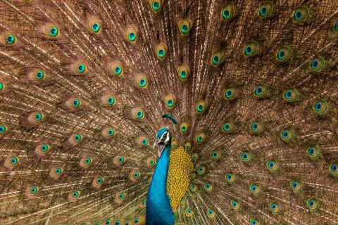 Copyright_Satvik Bhatt India_Entry_Open_Wildlife, courtesy of SWPA 2017