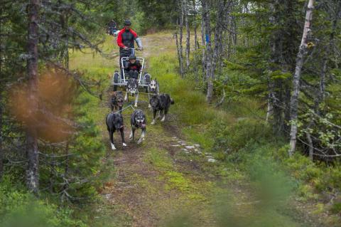 Vognturer med sledehunder