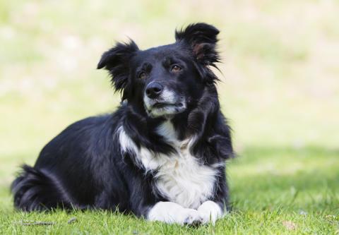 Grillrester en livsfara för hunden