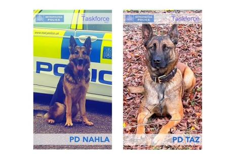 PD Nahla and PD Taz